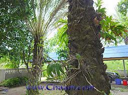 Rare, exotic palms