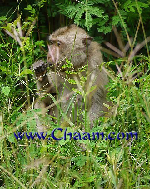 Mammals and singing birsd in Kaeng Krachan