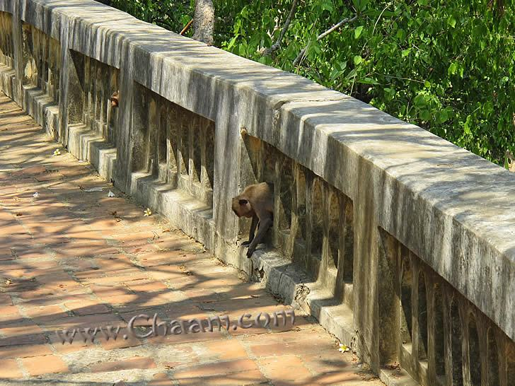 Monkeys are living in the temple Phra Nakon Khiri