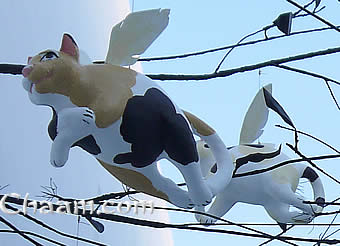 Flying cats in Thailand