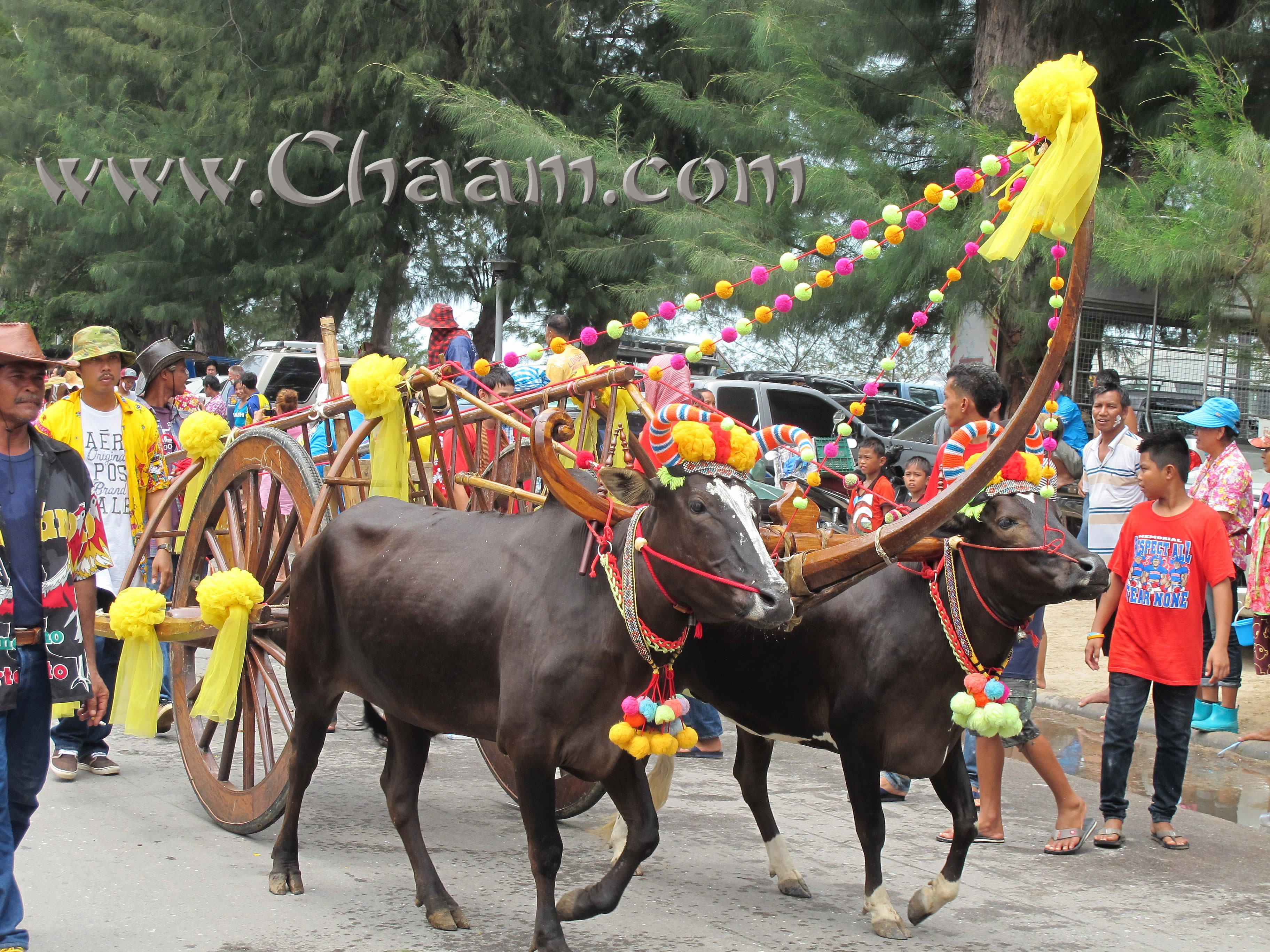 Water buffalos in Cha-Am at Songkran